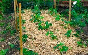 грядки огородные